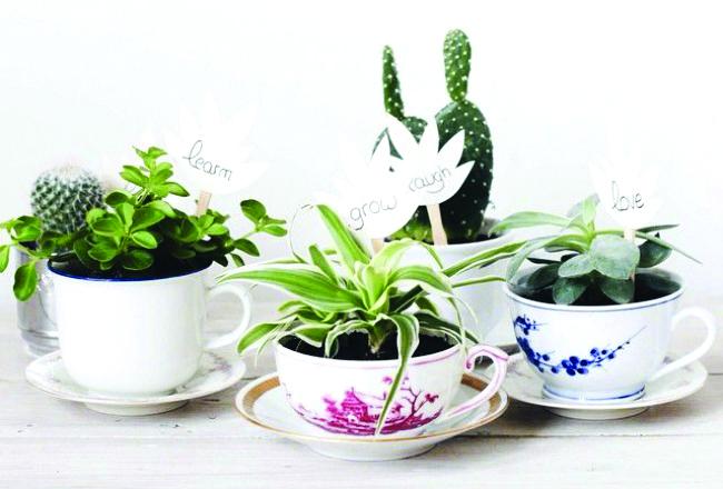 Faites entrer les plantes dans votre int rieur les confettis for Idee deco plante interieur