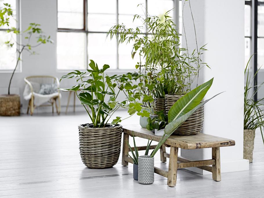 faites entrer les plantes dans votre int rieur les confettis. Black Bedroom Furniture Sets. Home Design Ideas