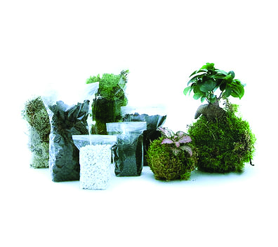 kit terrarium green factory
