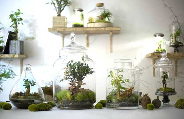 terrariums-green-factory