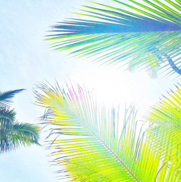 tropical-kipi