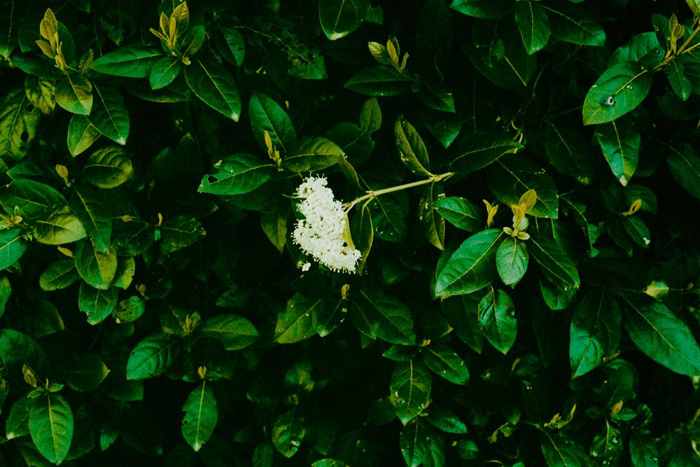 amelie-chassary-feuilles-les-confettis
