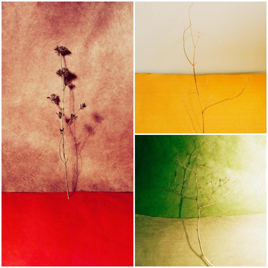 Mises en scène bien pensées, couleurs tantôt pastel tantôt sombres, le travail de la photographe Amélie Chassary a retenu notre attention. Découvrez-le : www.lesconfettis.com/amelie-chassary
