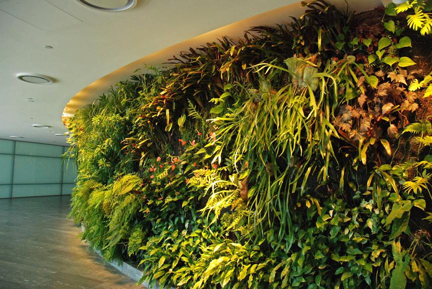Patrick blanc l 39 inventeur du mur v g tal les confettis - Mur vegetal patrick blanc ...