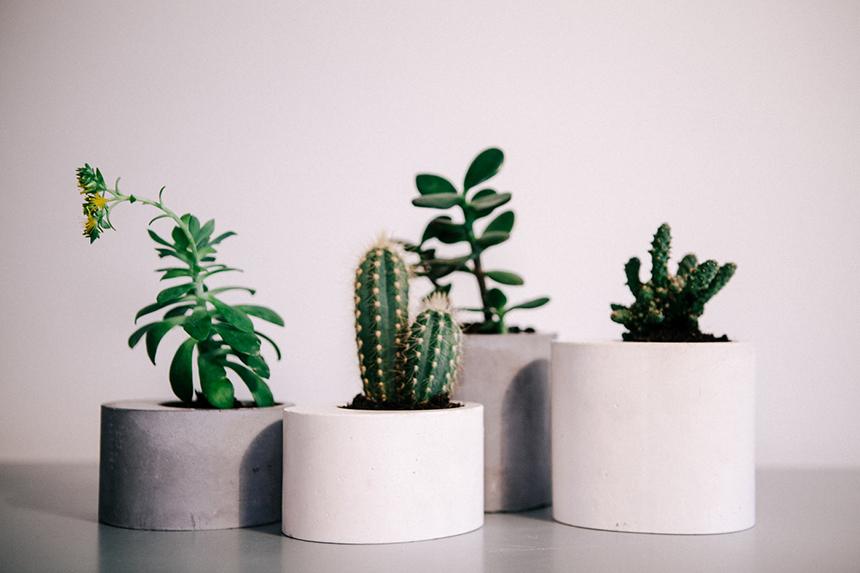 cactus-paris-deco-marbre