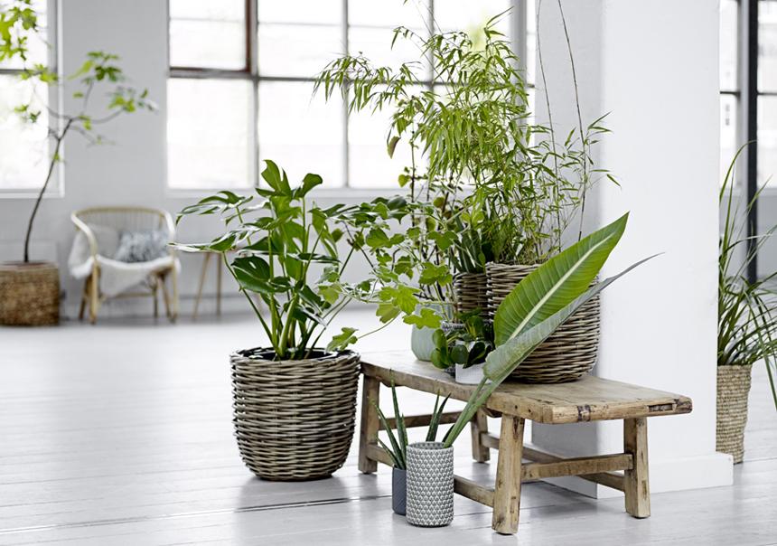 interieur-plantes-deco