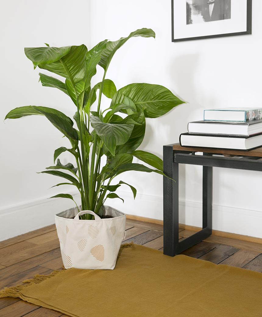plantes-interieures