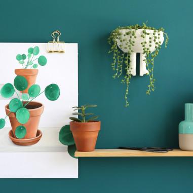 pilea green
