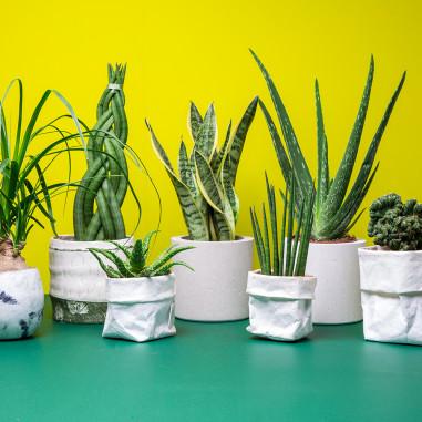 Bureau Pario succulente