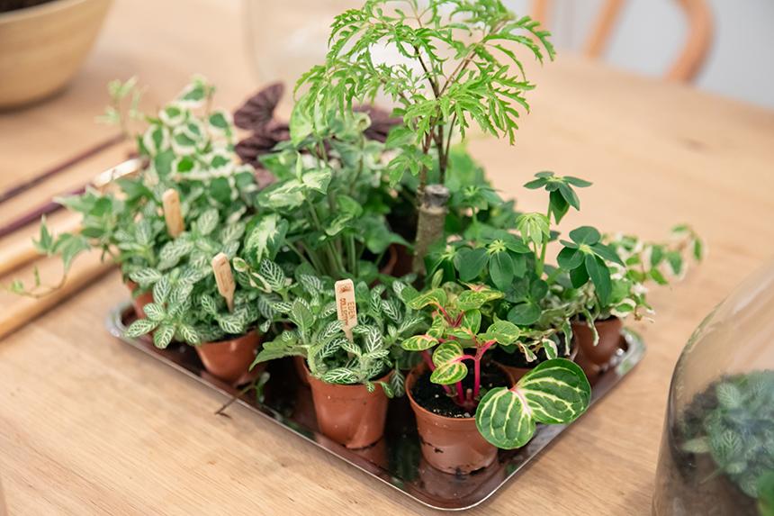 Ateliers green Ivy Les Confettis