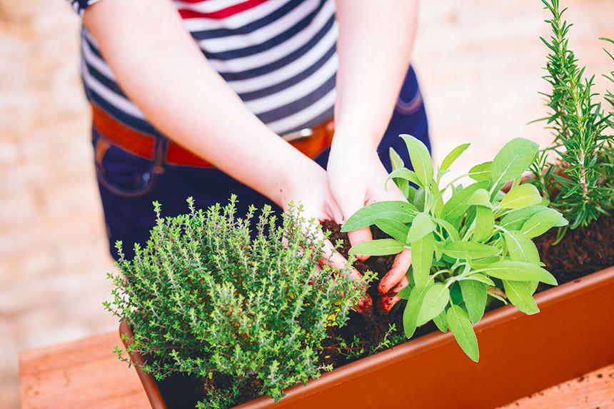 confettis-jardin-planter