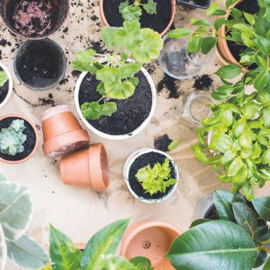 plantes-jardin-confettis